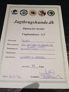 UT/VJP - certificate