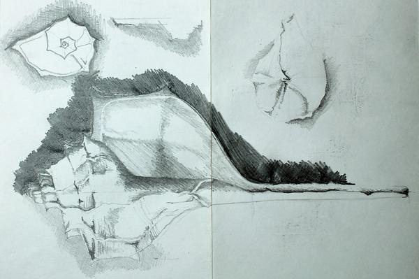 Shell sketchbook