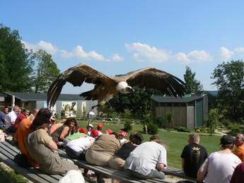 Greifvogelpark Katharinenberg Wunsiedel