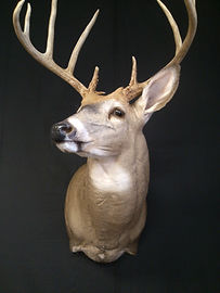 Nature's Image Taxidermy Springfield MO