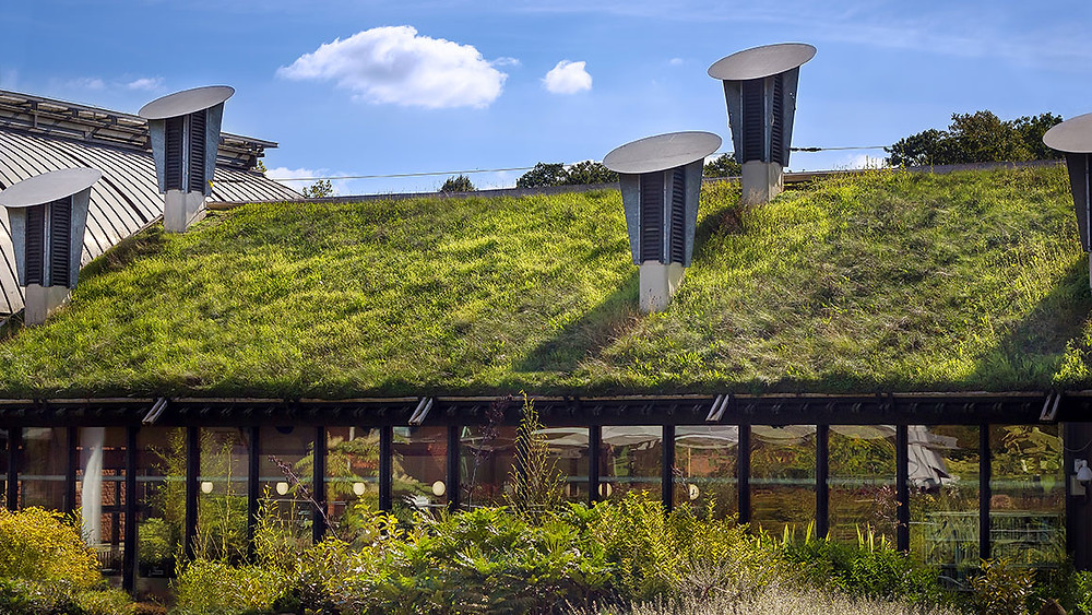 living rooftop on green building