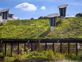 Green Building with Living Rooftops