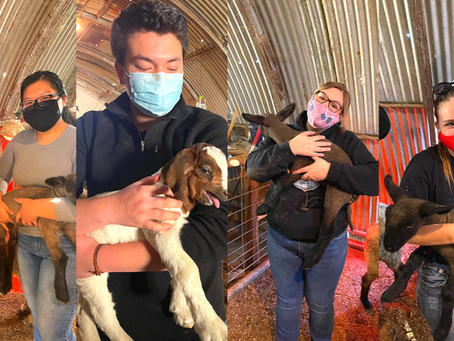 First Labs since March 2020 at the School Farm