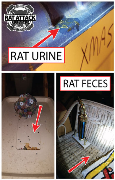 RODENT-URINE-FECES.jpg