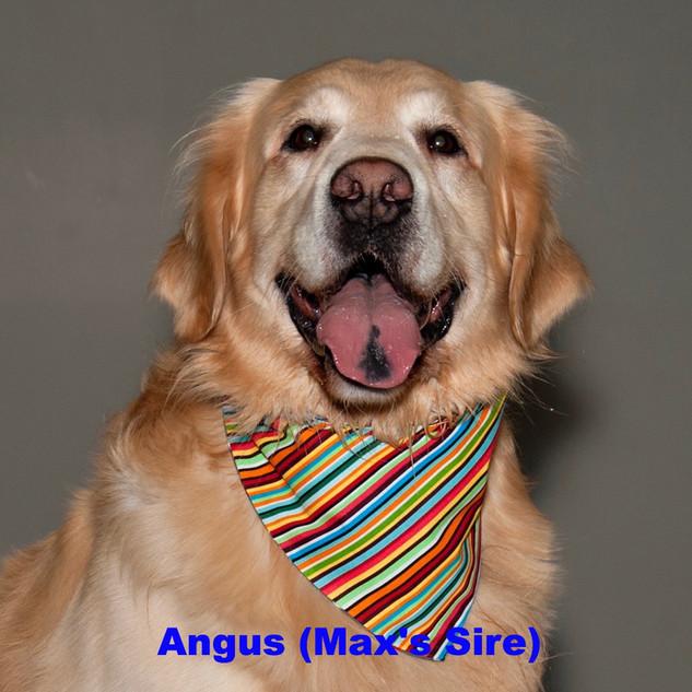 angus close_edited.jpg