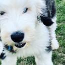Winston's blue eye