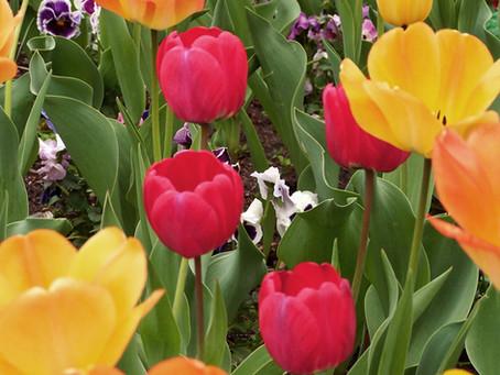 Springtime Special!!!