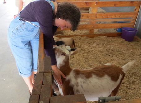 The goat that loved Reiki.