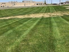mowing stripes at coke 3.jpg