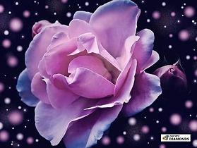 rose-polka-dot-paint-with-diamonds_444_5