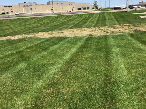 mowing stripes at coke.jpg