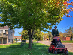 mowing on standup with fall tree.jpg