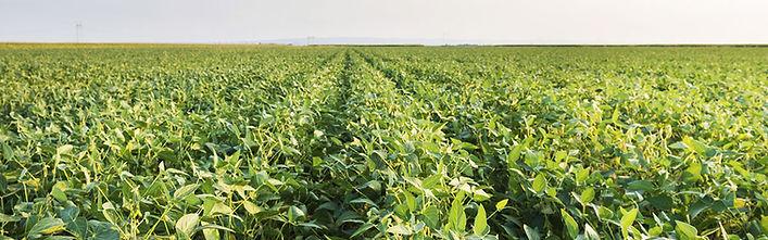 Beans, Corn, Fertilizer, Inoculants