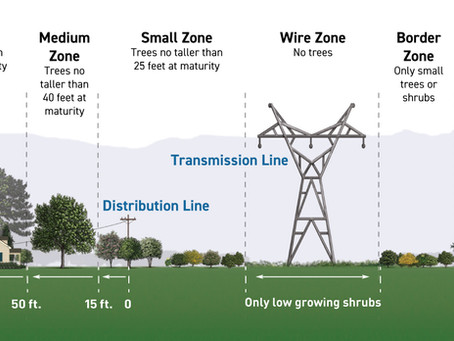 Is There A Better Way For Kentucky Utilities to Approach Tree Removal?
