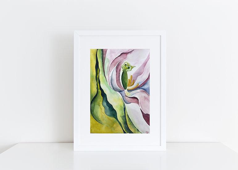 Devotion_Tulip