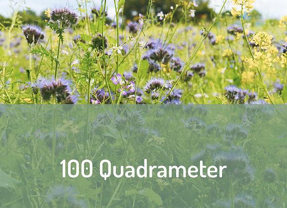 Blüten Botschafter*in über 100m²