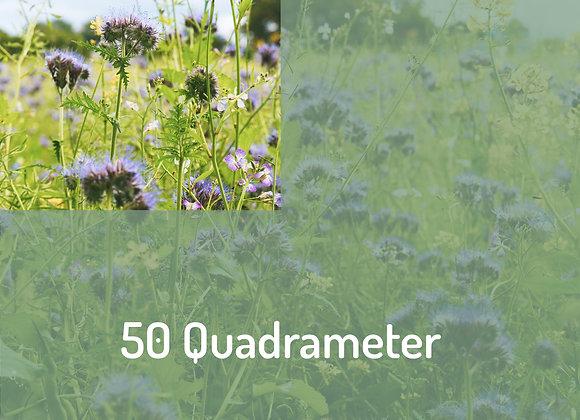 Blüten Botschafter*in über 50m²