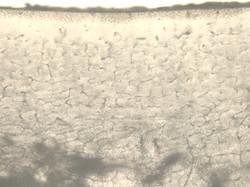 image of bone slice