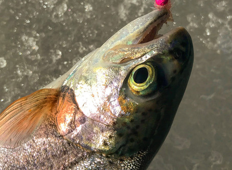 Colorado ice fishing trips available