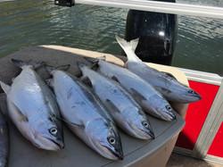 Kokanee Salmon on the boat
