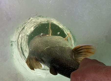 Blue Mesa Ice Fishing Report.....