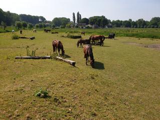Vakantie voor de manegepaarden