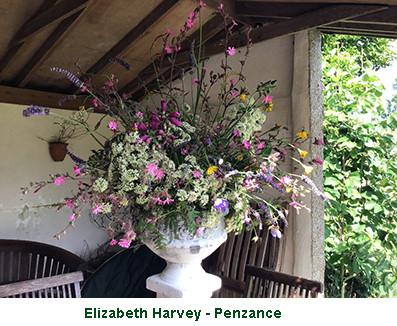 Elizabeth Harvey - penzance