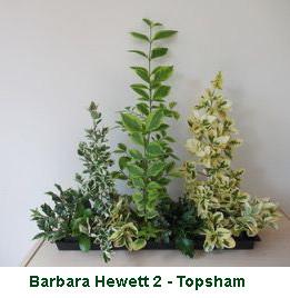 Barbara Hewett 2 - Topsham