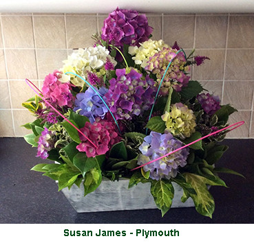 Susan James - Plymouth