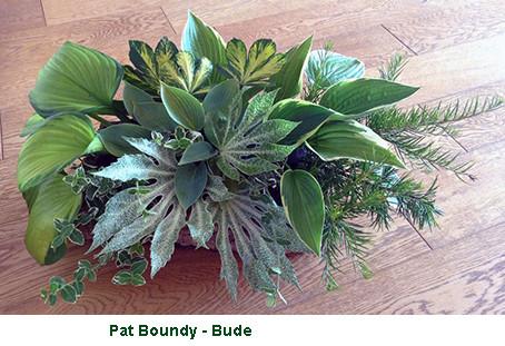Pat Boundy - Bude