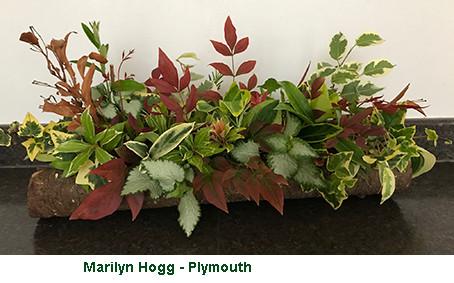 Marilyn Hogg - Plymouth