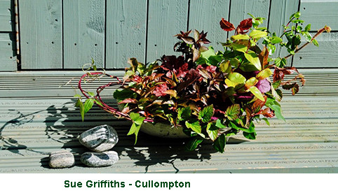 Sue Griffiths - Cullopton