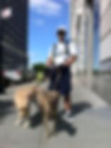 dog trainer new york