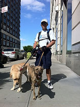 dog trainer new york