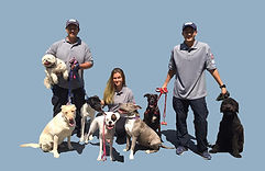 dog training manhattan