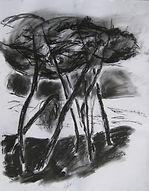 Bretagne arbres 2016 60x50 fusain Christine Lévy-Rostagnat(69)