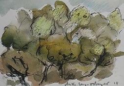Garrigue à Gordes, 2014, 15x20, aquarelle fusain, Christine Lévy-Rostagnat