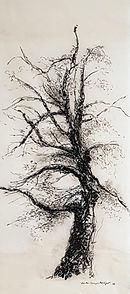 Christine Lévy-Rostagnat, arbre,2016   170 x 70 cm dessin au fusain et mine de plomb sur papier thaï