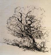 Christine Lévy-Rostagnat, arbre, 48 x 52 cm 2016, dessin au fusain sur papier thaïlandais