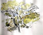 Arbre Christine Lévy-Rostagnat aquarelle 25 x 25