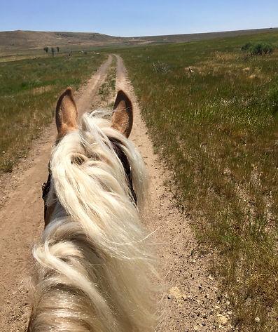 Dakota in Trail.jpg