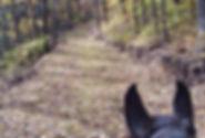 Horseback Riding on Wet Bark/Oak Ridge Trail System
