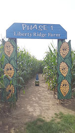 The Capital District Tourism Gnome ready to enter he phase 1 corn maze at Liberty Ridge Farm in Schaghticoke, Rensselaer Couny, New York.