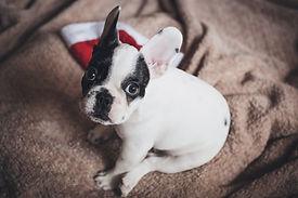 小さな子犬