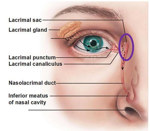 lacrimal drainage system dry eye