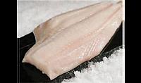 fish, salmon