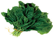 green leaf, vegetable