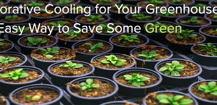 Evaporative Cooling for Your Greenhouse: The Easy Way to Save Some Green