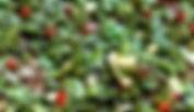 Chimmuchirri Sauce 400.jpg