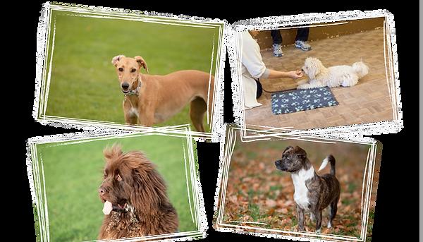Happy dogs training